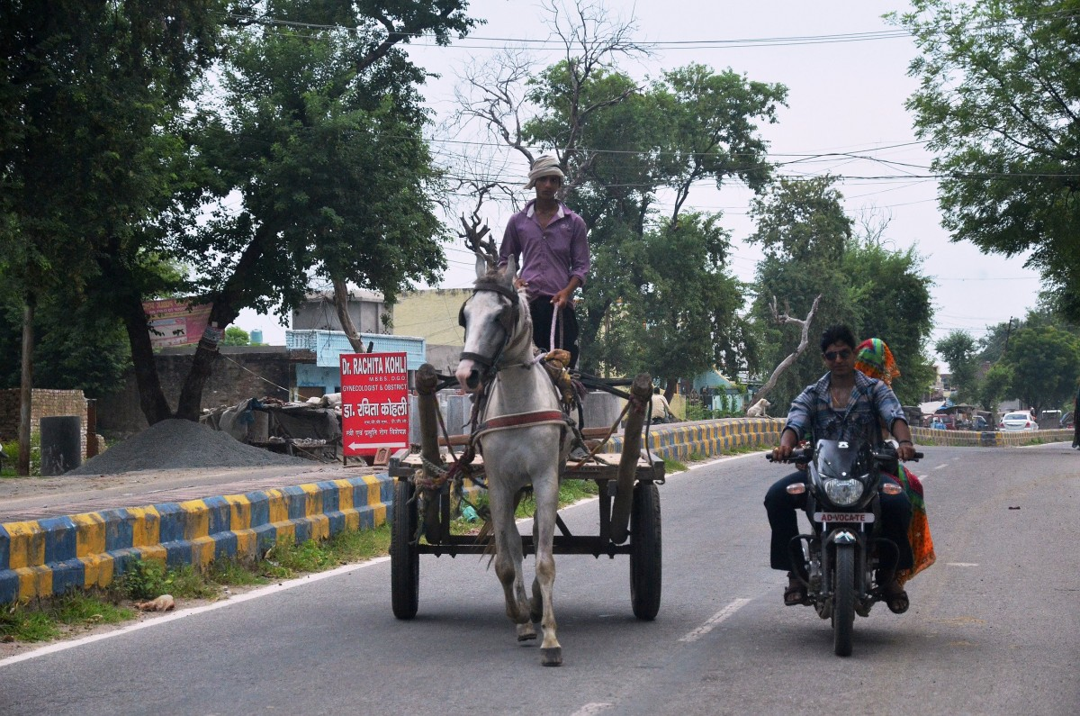 Bike, Horse, Car, Camel, Elephant, everything u can think of appears on the road in India